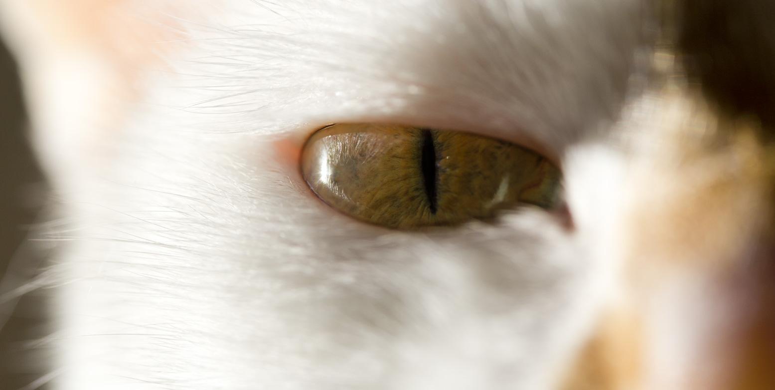 Mal Orange, mal Grün – Lucys Augen.