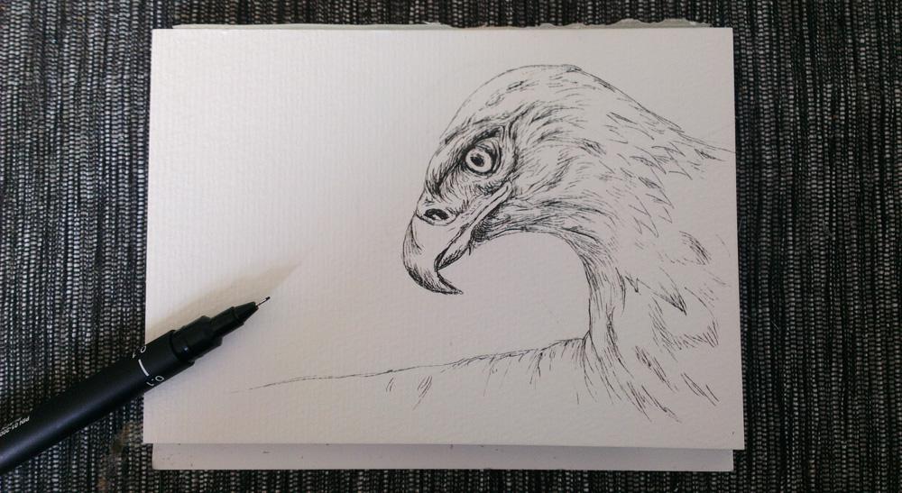 Adler auf dem Postkartenblock von Hahnemühle.