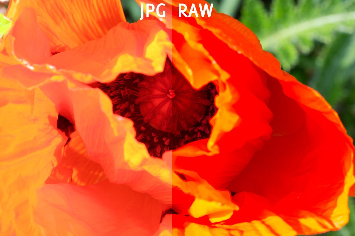 Links das JPG unbearbeitet aus der Kamera – Rechts das RAW, auch ohne Bearbeitung.