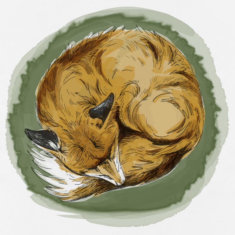 Coloriert mit Waterbrush Spitzen in Photoshop - Sleeping Fox.