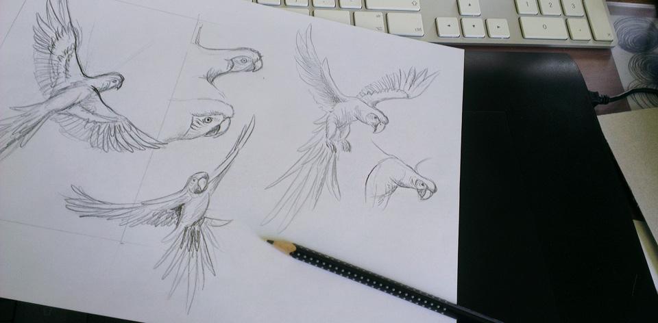 Die Skizzen zu den Papageien - Aras aus dem Amazonas.