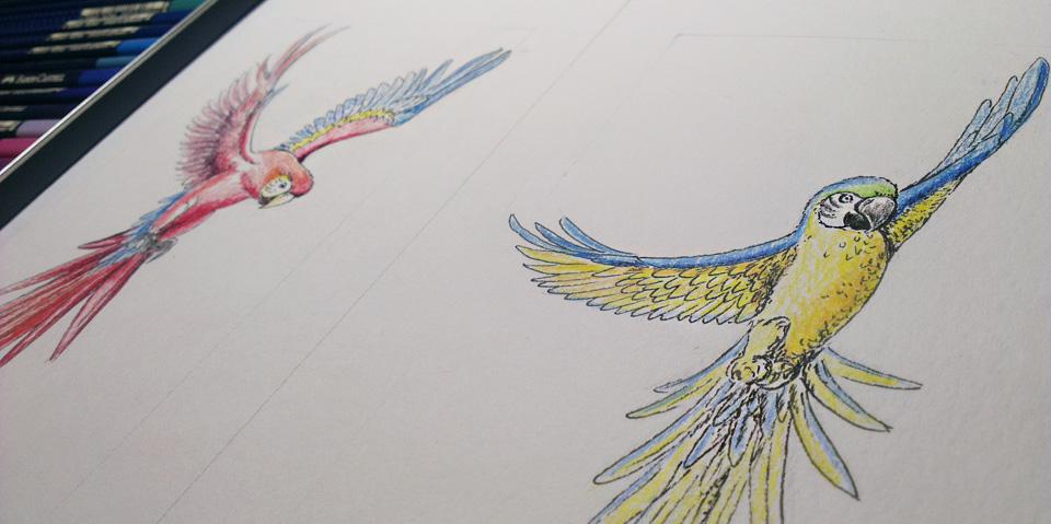 Beide Papageien haben ihre Farbe erhalten.