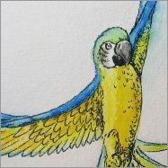 lpblog_147_hahnemuehle-britannia_parrots2015-04-02-21.07_artikel