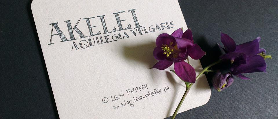 """Ein wenig Typographie für die Rückseite – """"Aquilegia Vulgaris"""""""