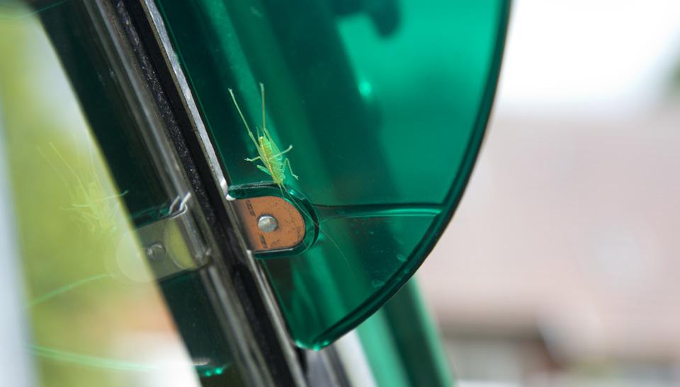 Ein grüner treuer Beifaher – natürlich an des Gärtners Fiat.