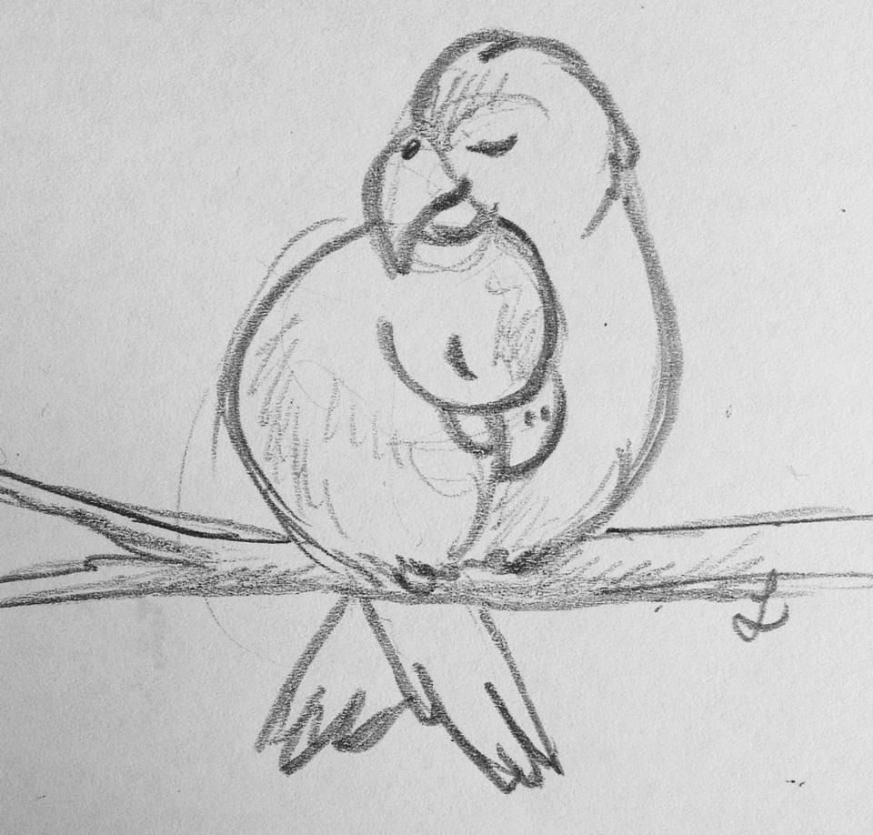 Kuschelnde Sittiche – erste Skizze mit Bleistift.