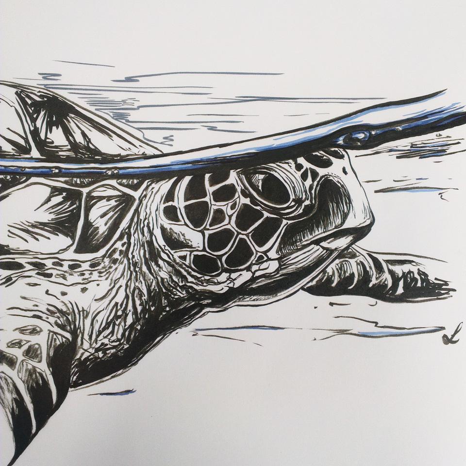 Eine Meeresschildkröte gezeichnet mit Pentel Pocketbrushpen und Faber PITT Artist Brush.