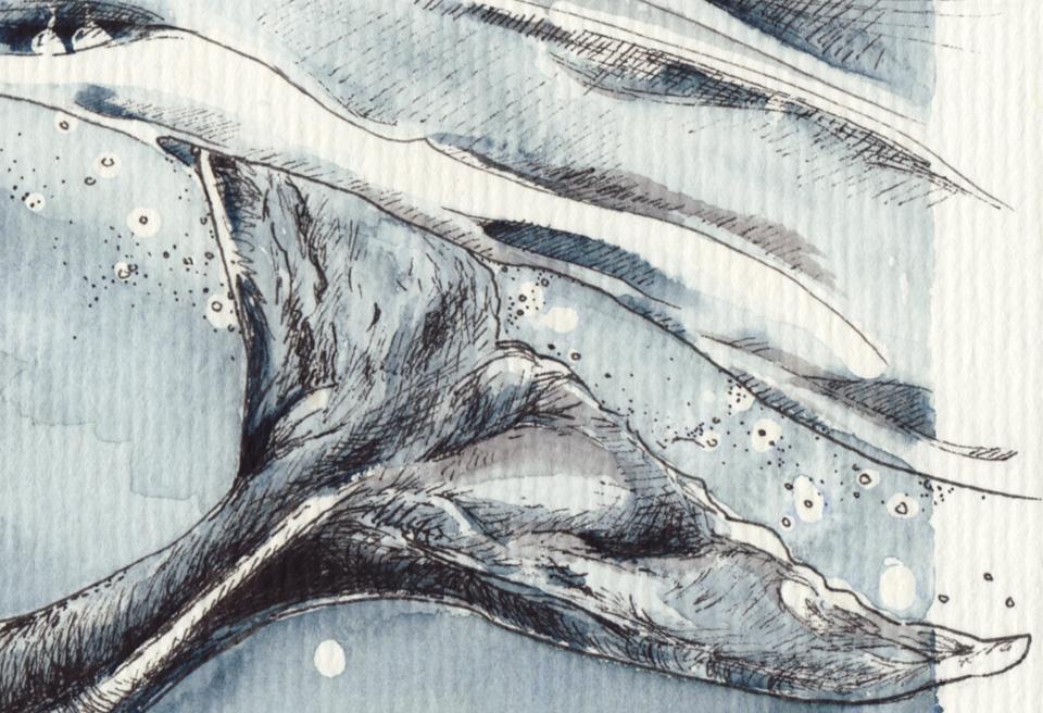 Die Flucke ragt über den Rand hinaus – Detail der Buckelwal Zeichnung.