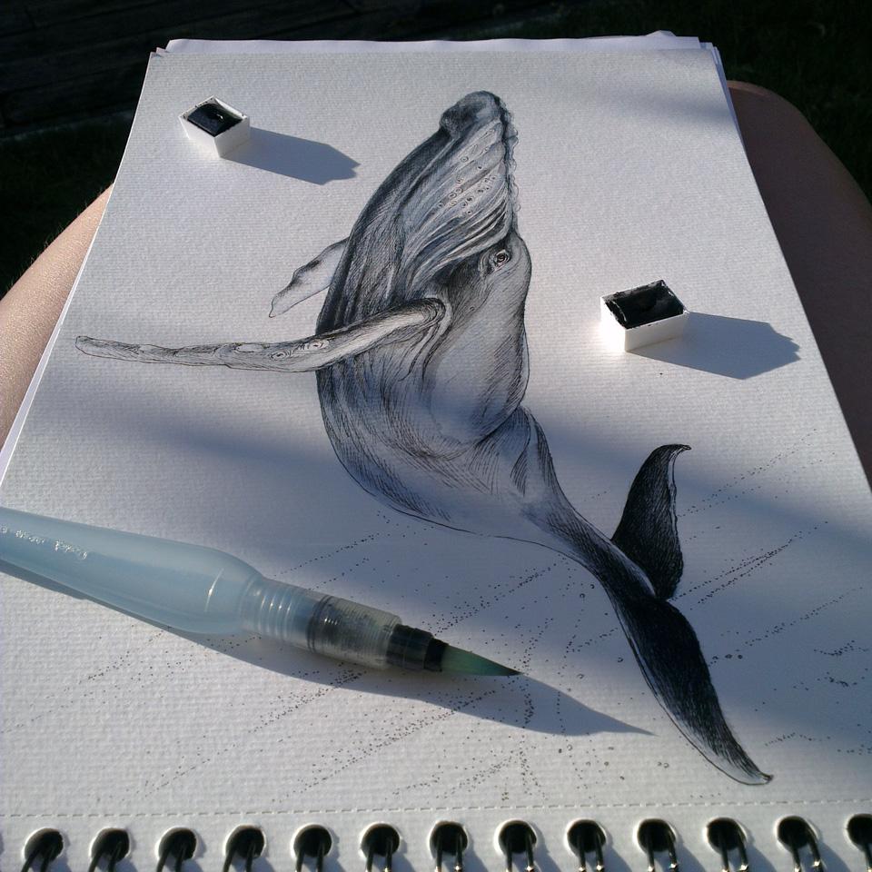 Ausarbeitung des Wals mit Aquarellfarben und dem Waterbrush.