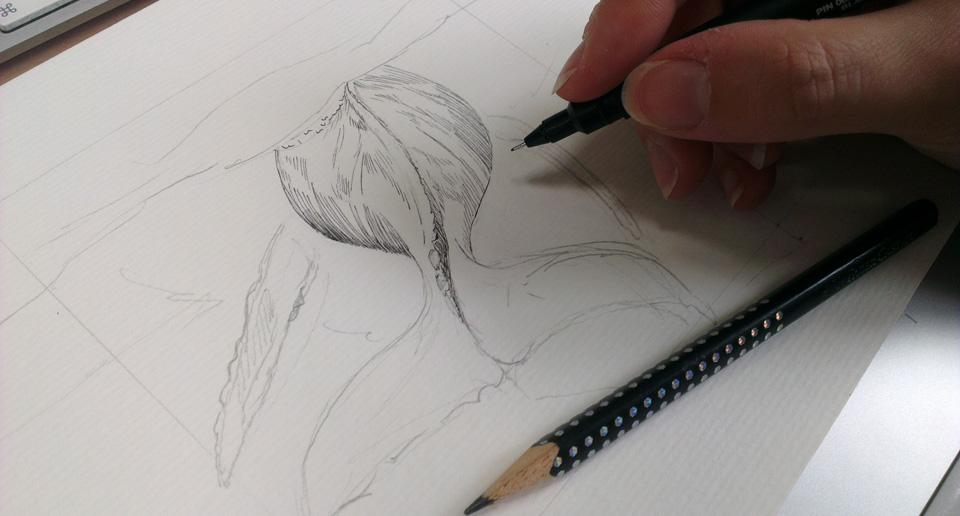 Die Bleistiftskizze wird mit Tusche nachgezeichnet…