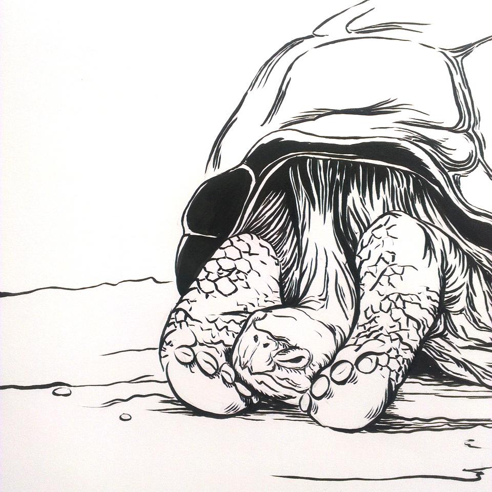 Tired Tortoise. Feine Linien mit dem Pentel Pocketbrushpen.
