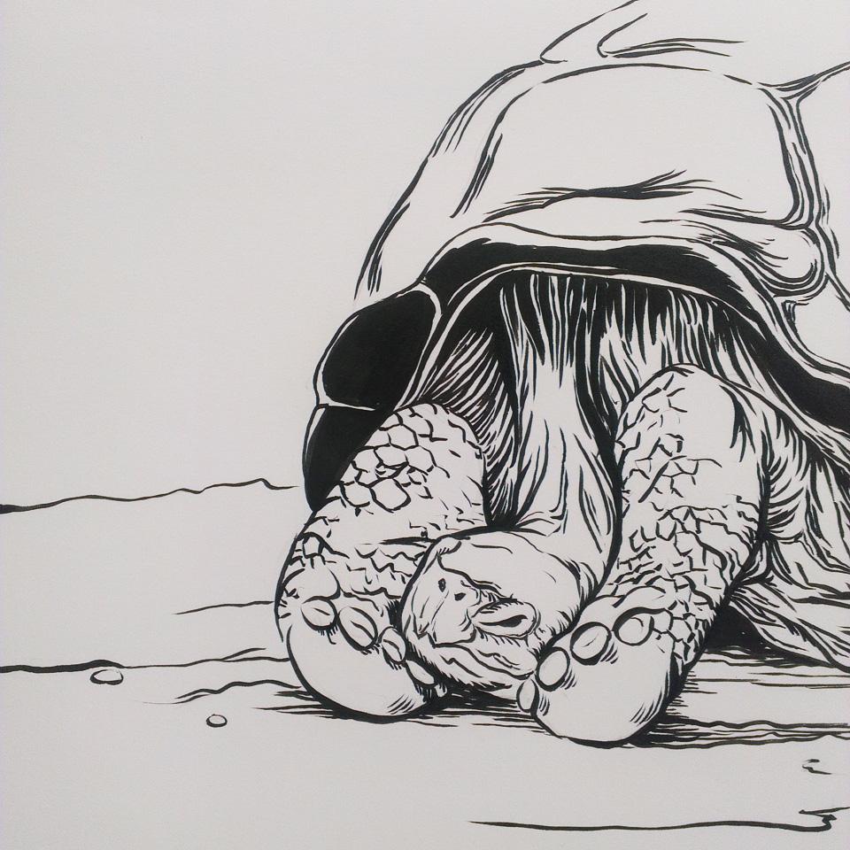 Auch sehr müde, diese Schildkröte.