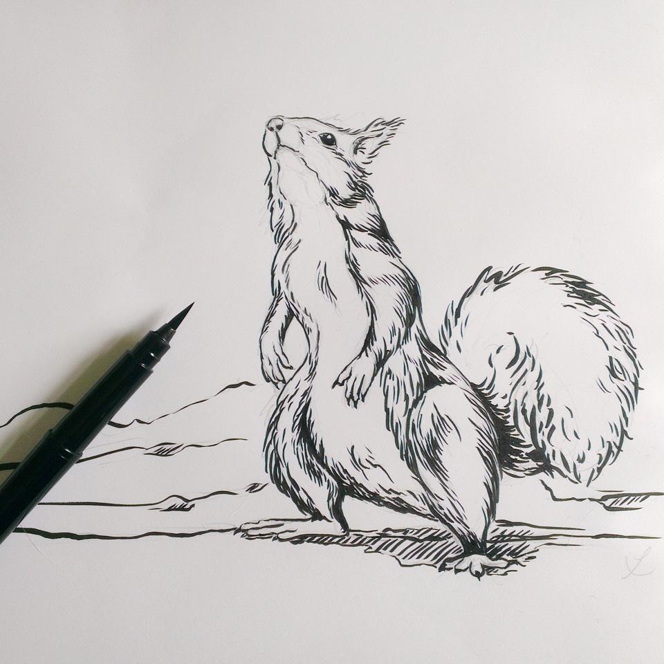 Nüsse? – Zeichnung mit dem Pocketbrush