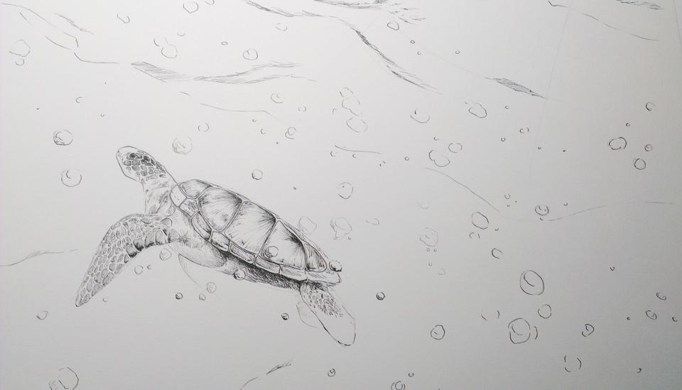 KW 10: Die ersten Striche einer Meeresschildkröte