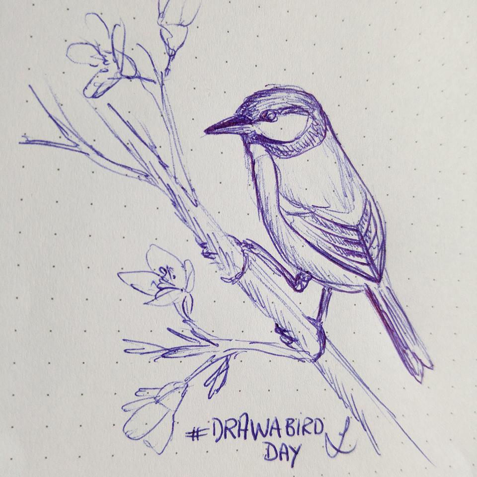 #drawabirdday Male einen Vogel: Eine Kohlmeise wie wir sie damals aufpeppelten, als ich ein Kind war.