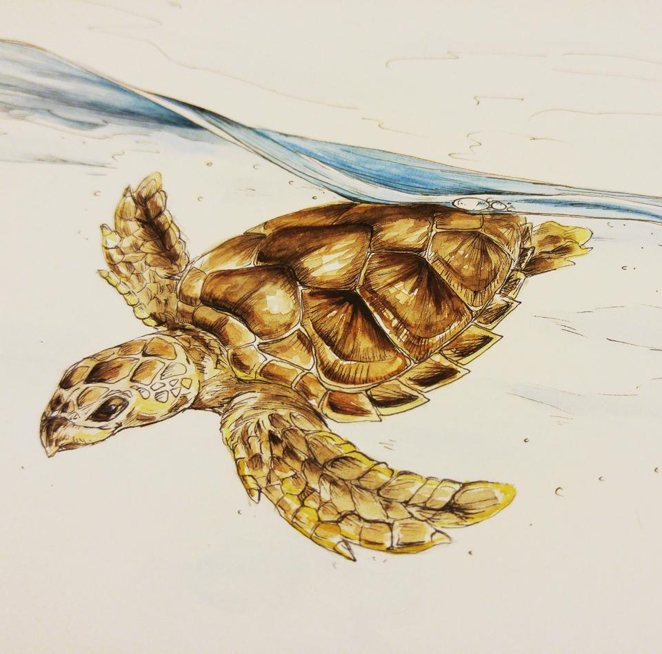Fertig: Diese Karettschildkröte taucht ab.