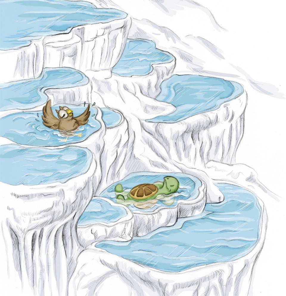 Eule und Schildkröte genießen das Thermalwasser in den weißen Kalksteinsinterrassen sichtlich.