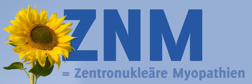 lpblog_177_ZNM-MTM_sunflower_7051_quer