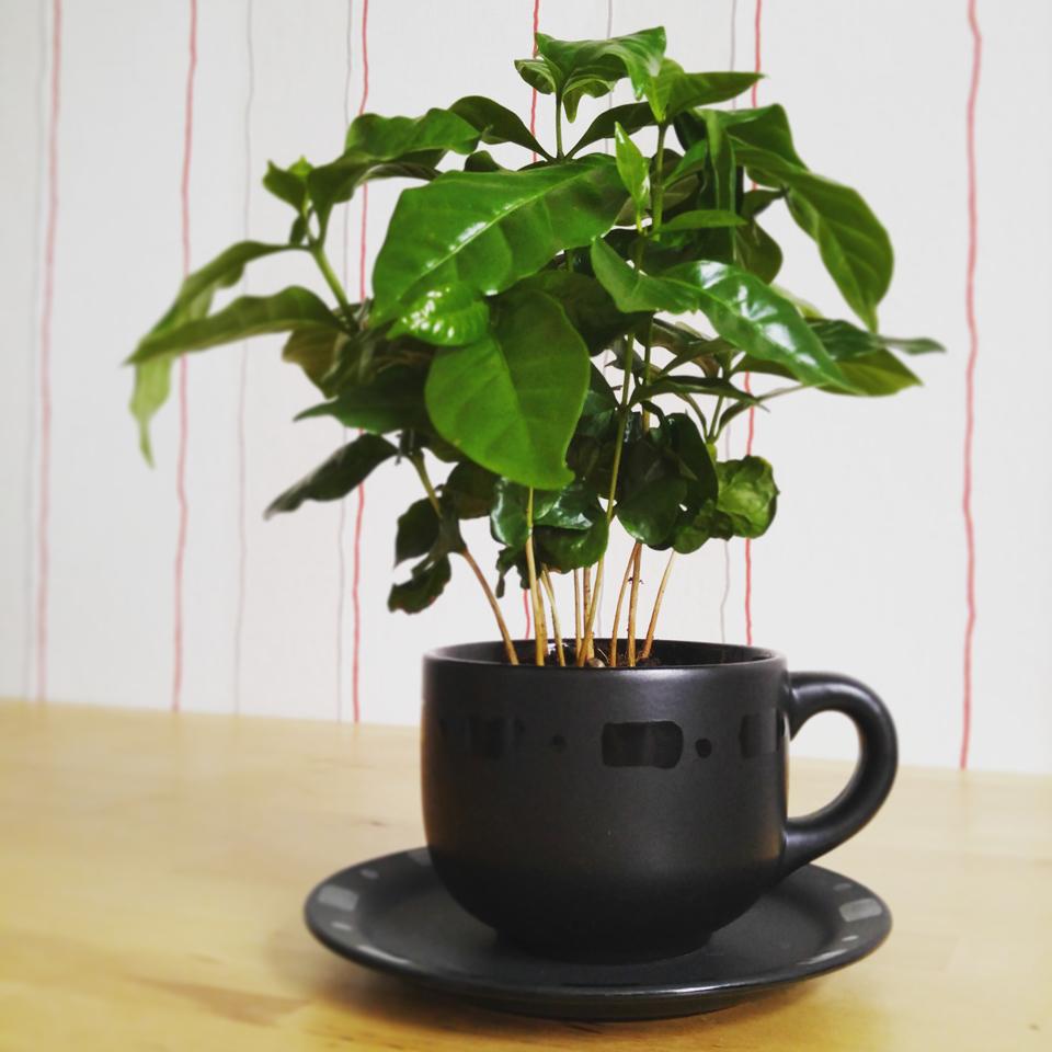 Mein Kaffee in der Kaffeetasse.