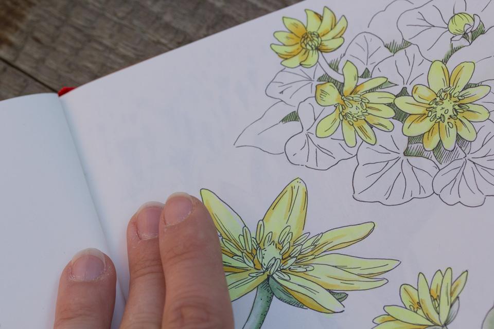 Neben den gelben Blüten sieht man leicht, wie das dahinter liegende Blatt mit den Krokussen durchscheint.