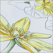 Die Finliner Illustration wurde coloriert mit Copic bzw. Stylefile Alkohol Markern.