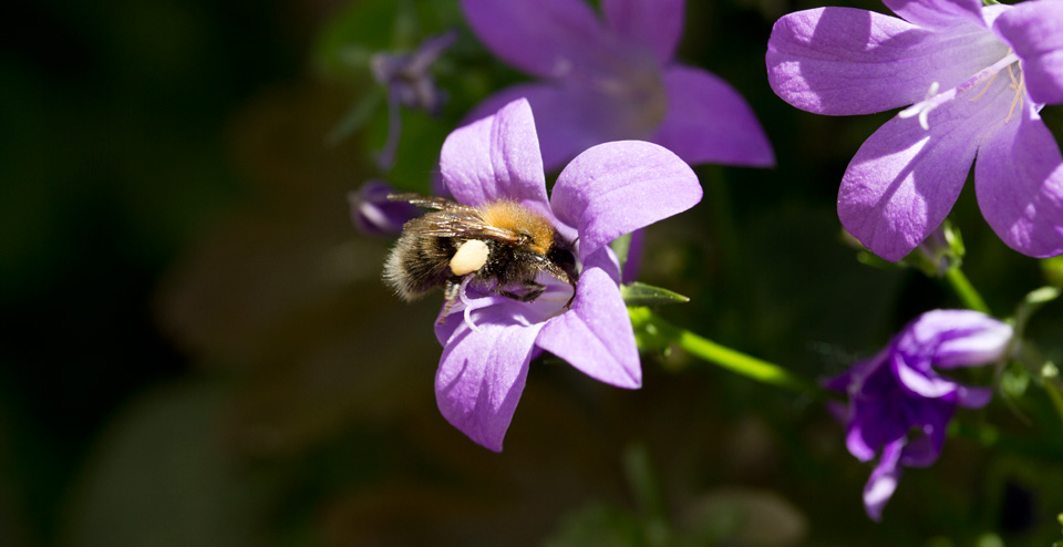 Ein fleißiges Bienchen!