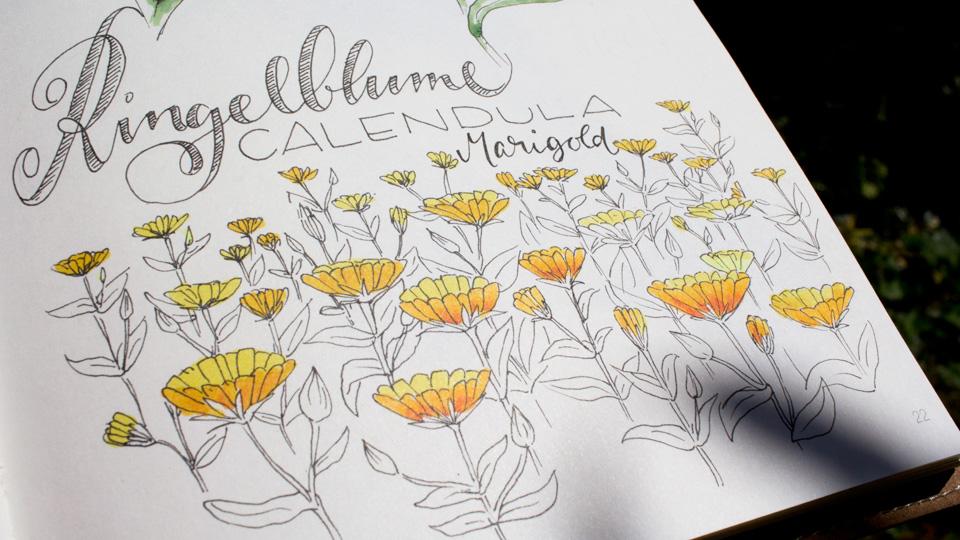 """Leuchtender Blütenteppich – """"Marigold"""" kann sich schnell im Garten ausbreiten."""