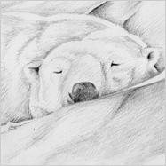 Eiskalt – Eisbär