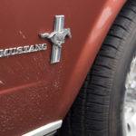 Dieser Mustang hatte es eilig.
