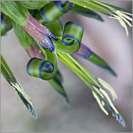 Phantastische Pflanze