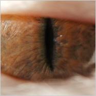 Das Auge von…