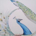 Majestetische Vögel – Pfauen