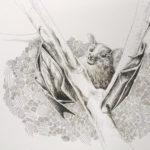 Little Bat hanging in a tree. Passend zum baldigen Halloween mal eine kleine Fledermaus