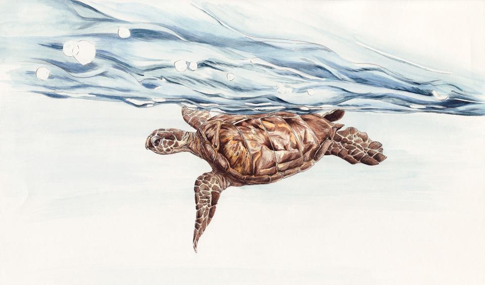 Die Unechte Karettschildkröte an der unruhigen Wasseroberfläche.