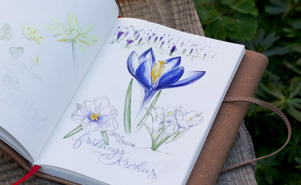 Der Frühlingskrokus - die natürliche Farbgebung zwischen Weiß, mit leichtem Lila und strahlendem Blaulila.
