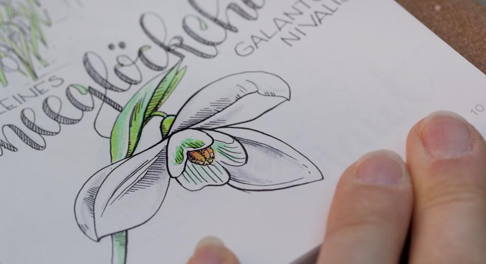 Die inneren Blütenblätter des Schneeglöckchens duften stärker als die äusseren zur Orientierung für Bienen und Falter.