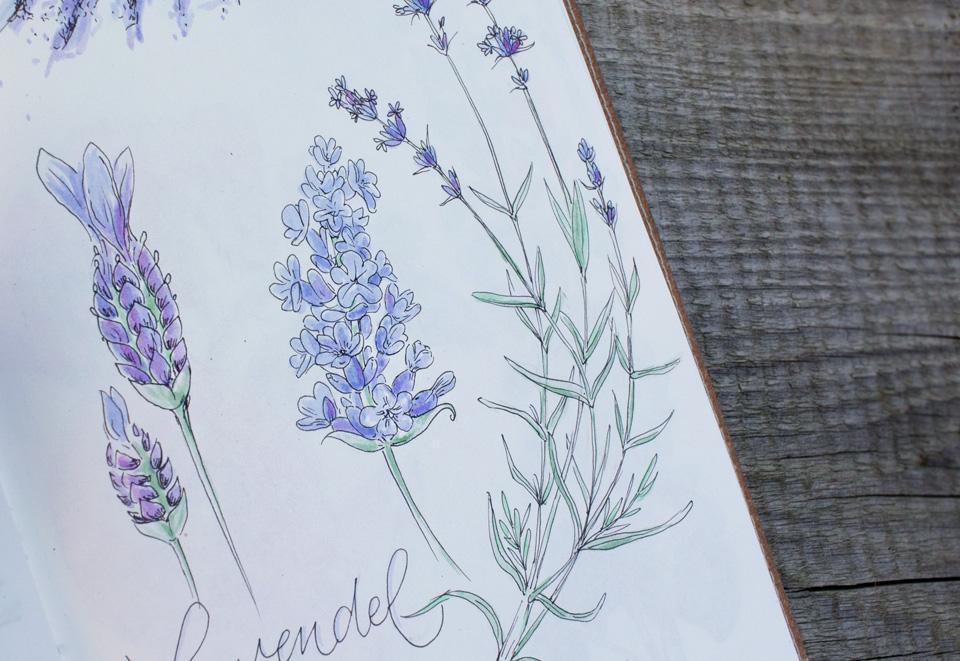 Lavendelblüten gibt es in vielen verschiedenen Formen.