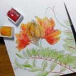 Der Afrikanische Tulpenbaum hat faszinierende Blüten, die sich nach aussen hin auffalten.