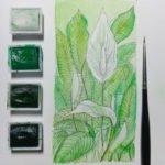"""""""Peace Lily"""" bei uns Einblatt genannt. Die hellen Grüntöne der Blätter betonen die reinen weißen Blüten."""