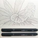 Alpinia Purata. Ein Ingwergewächs mit faszinierenden Blüten.