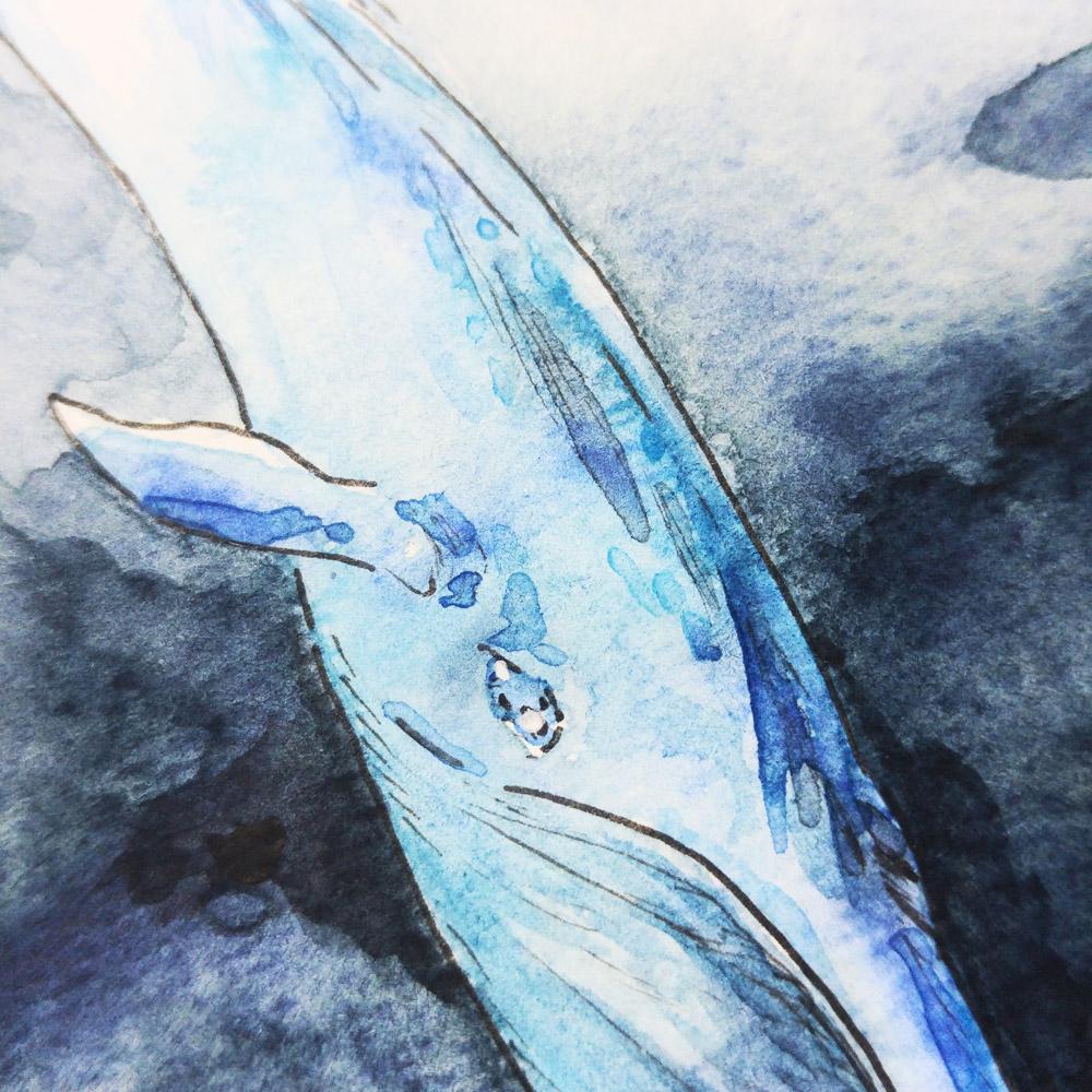 Detail der vielen Farbspritzer in allen Blautönen auf der Haut des Blauwals.