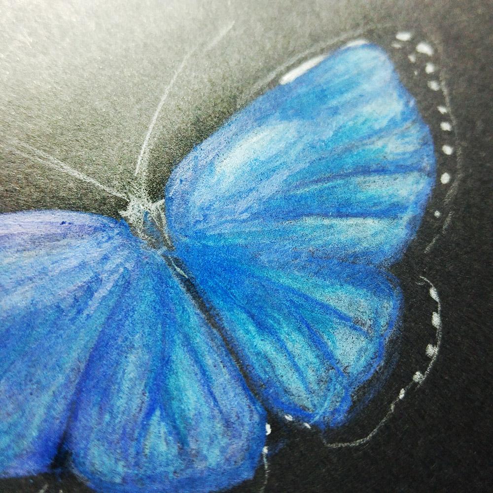 Viele Blaufacetten zeigen sich auf den Flügeln des Himmelfalters, dem größten Schmetterling unserer Erde.