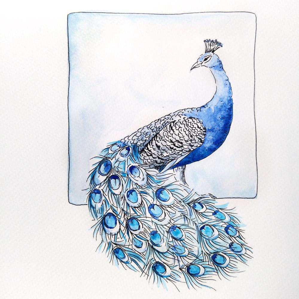 Ein stolzer Vogel, der Blaue Pfau mit seiner Schleppe aus leuchtenden Federn.