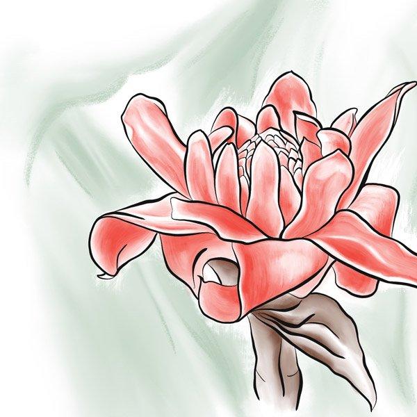 Die Blüte des Ingwer.