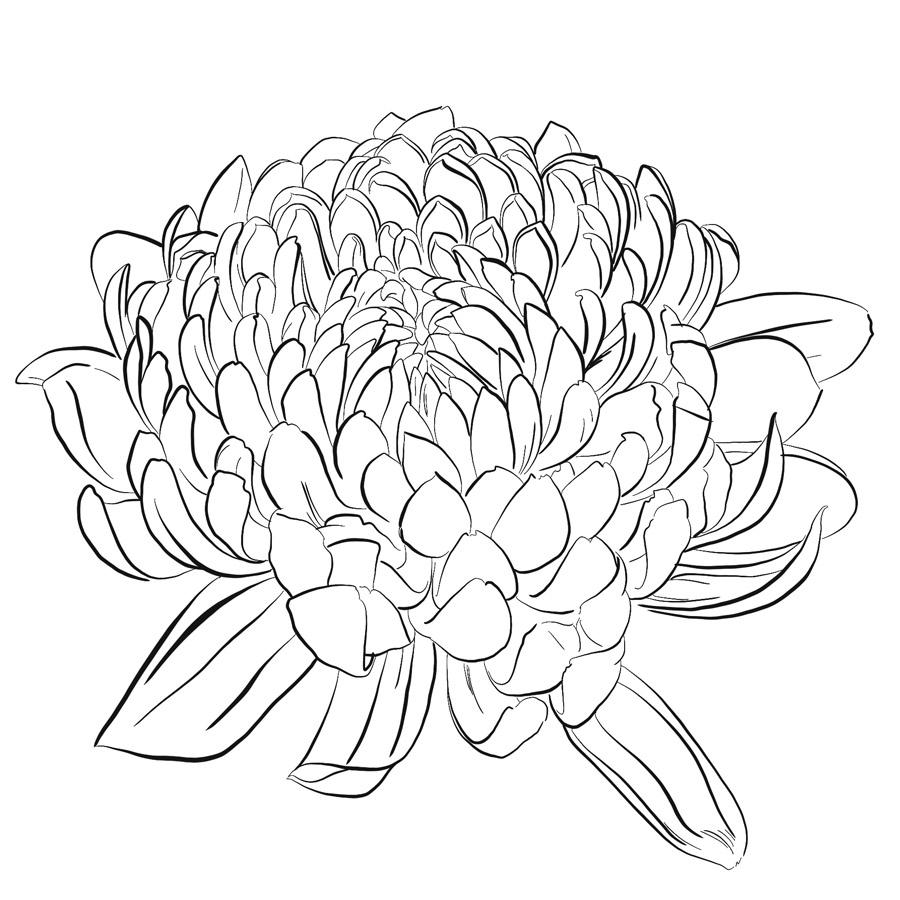 Die Outlines für die Chrysantheme mit dem Pinsel Künstlertusche erstellt.