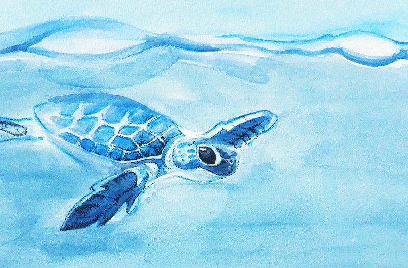 Meeresschildkröte auf dem Aquaboard von Ampersand