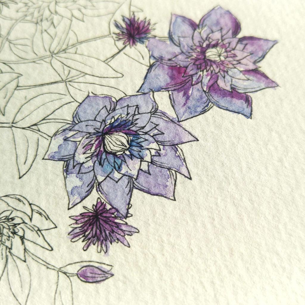 Coloriert habe ich nur die blau-violetten Blüten mit Aquarellfarben.