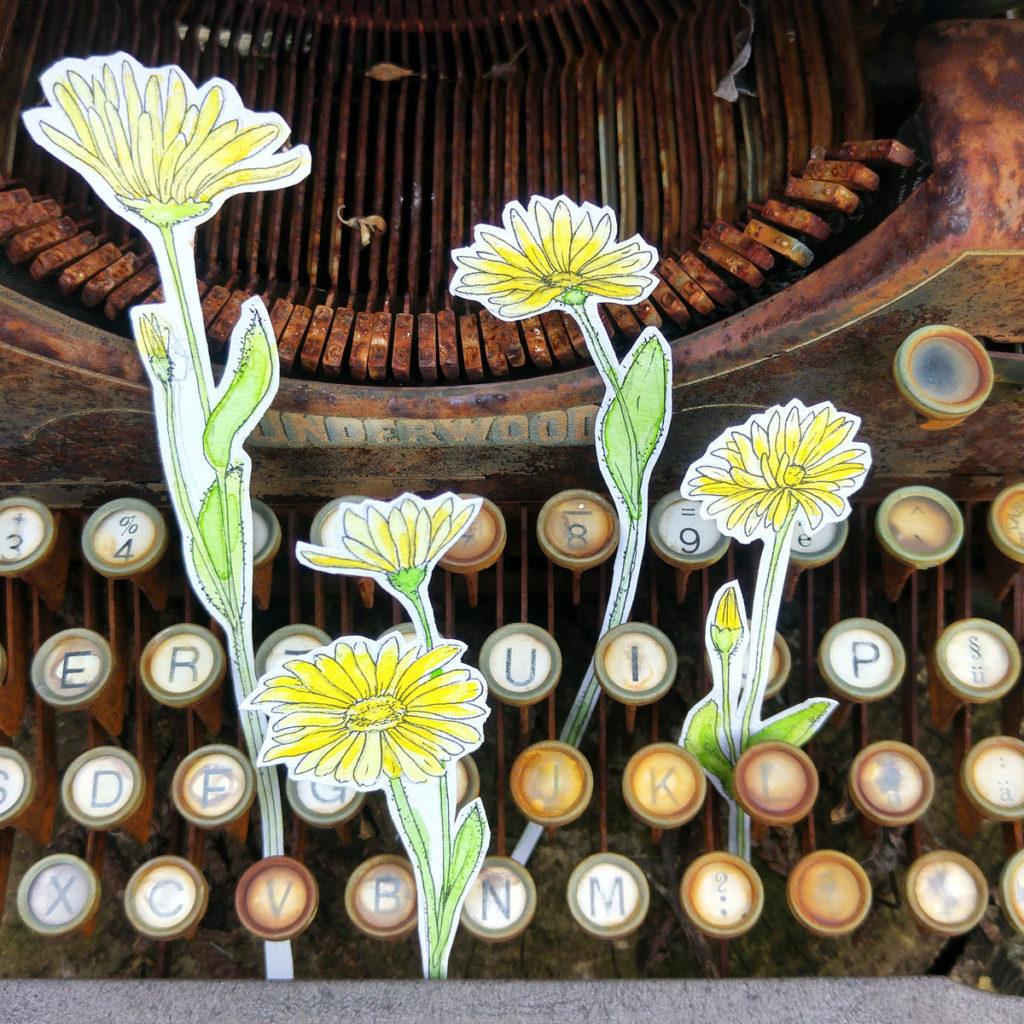 Clendula - Die Ringelblume in den Tasten der alten Underwood Schreibmaschine.