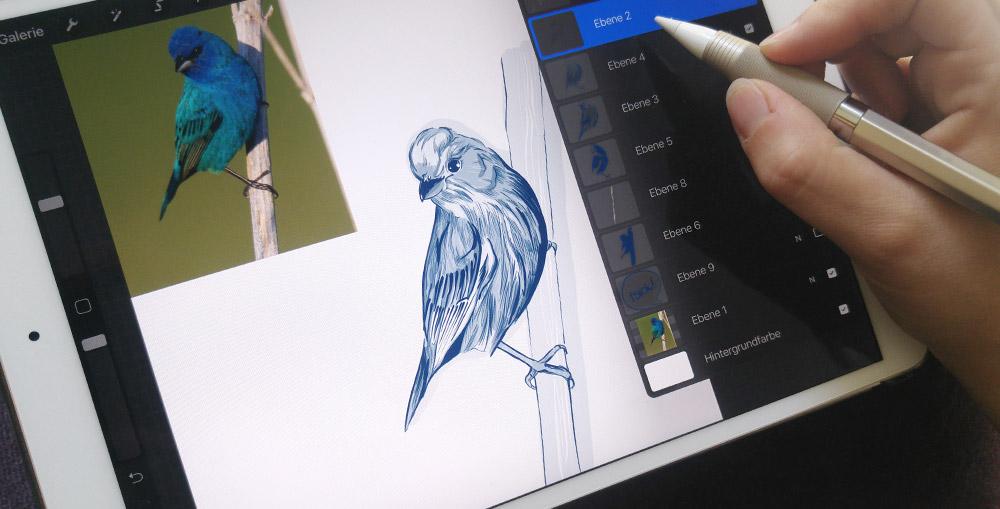 Die Arbeitsfläche von Procreate mit dem Referenzbild und meiner Zeichnung des Indigofink.