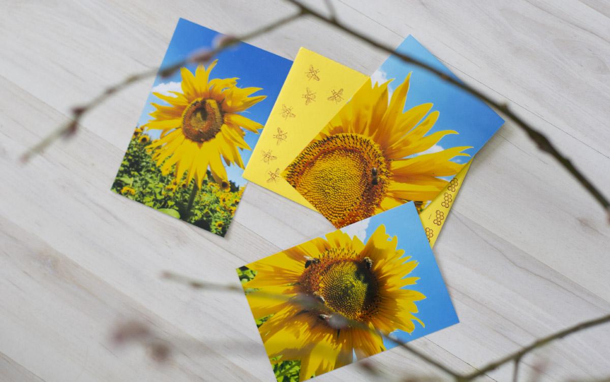 Fotos vom eigenen Bienenvolk bei der Arbeit hat Dorothee aus dem Odenwald gesendet. @sieben–zacken